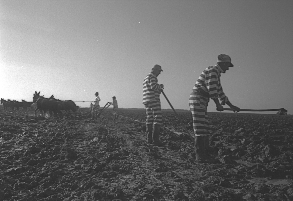 Convict Leasing and Chain Gangs